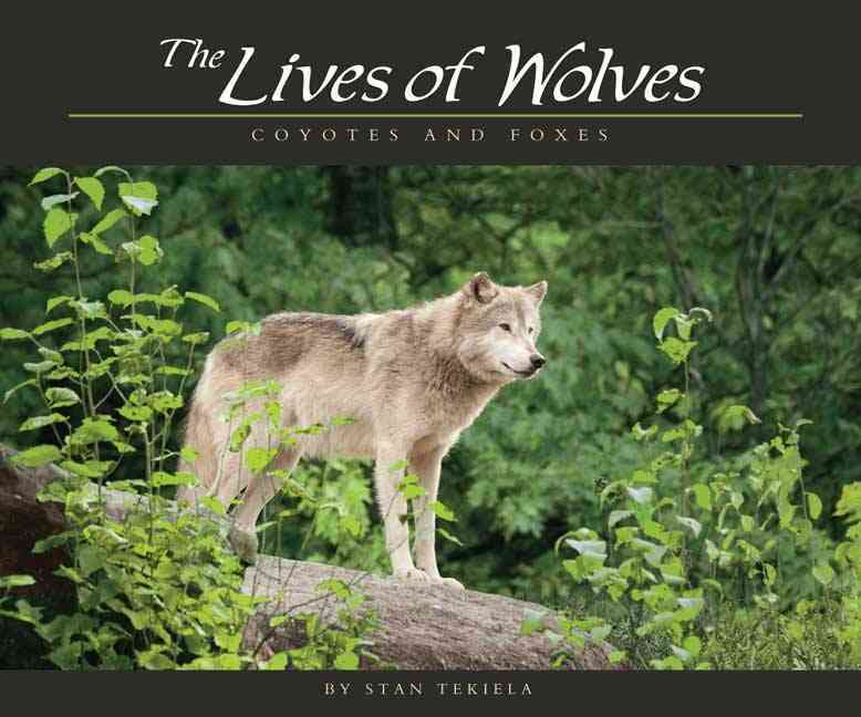 The Lives of Wolves, Coyotes and Foxes By Tekiela, Stan